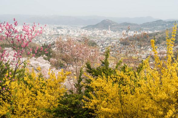 20160410朝の福島・花見山A7RII-51.jpg