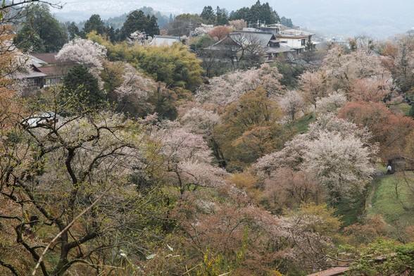 20150411朝の奈良・吉野山SD1-113.jpg