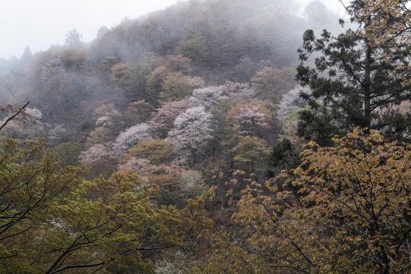 20150411朝の奈良・吉野山SD1-2.jpg
