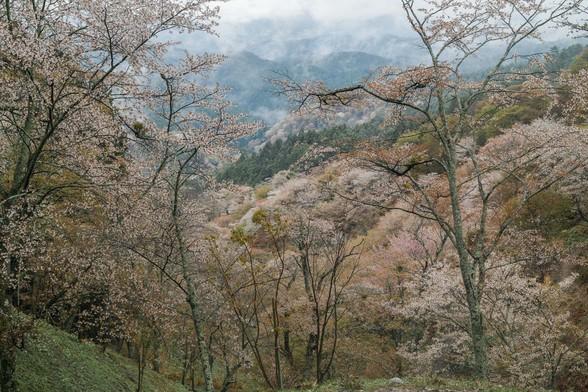 20150411朝の奈良・吉野山SD1-86.jpg