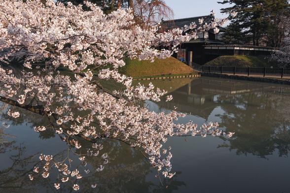 20150422朝の弘前・弘前公園SD1-37.jpg