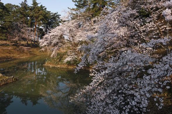 20150422朝の弘前・弘前公園SD1-58.jpg