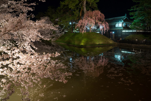 20150423夜の弘前公園A7R-2.jpg