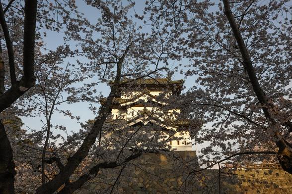 20150423朝の弘前・弘前公園SD1-27.jpg
