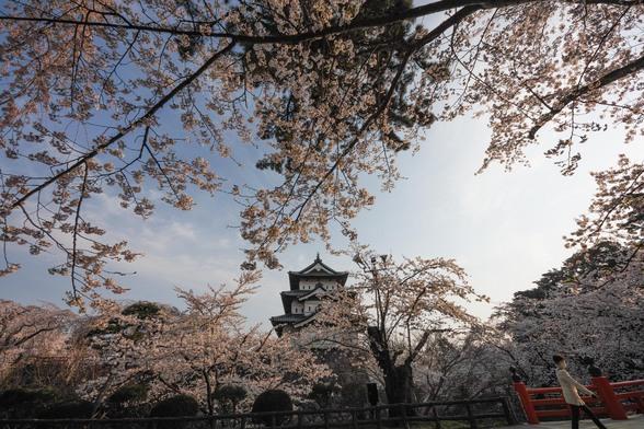 20150423朝の弘前・弘前公園SD1-47.jpg