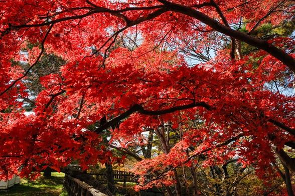 20151103午前の弘前公園XT10-70.jpg