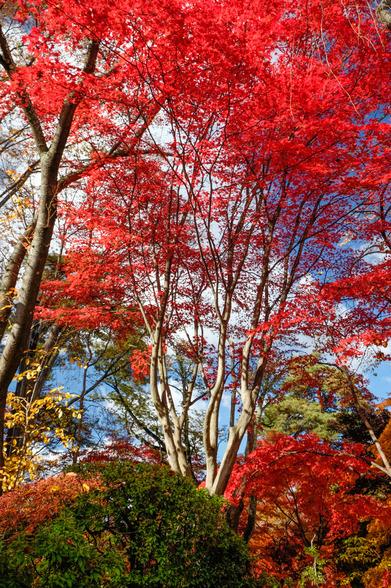 20151103午前の弘前公園XT10-81.jpg