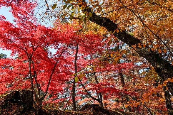 20151103午前の弘前公園XT10-85.jpg