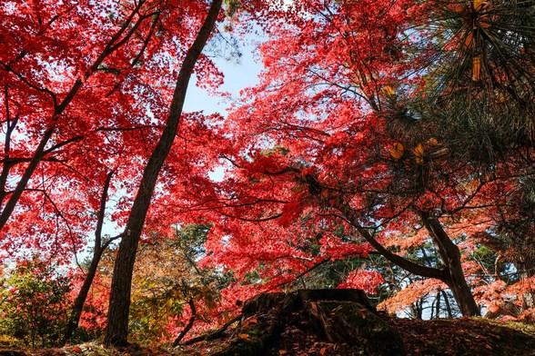 20151103午前の弘前公園XT10-86.jpg