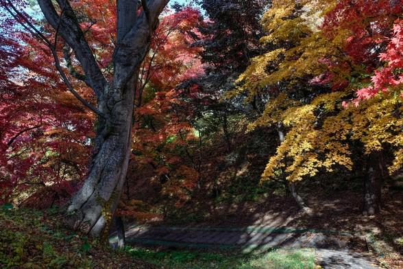 20151103午前の弘前公園XT10-87.jpg