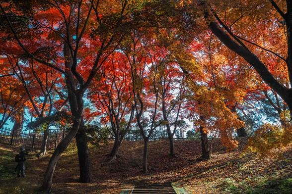 20171103午前の弘前・弘前公園SD1-123.jpg