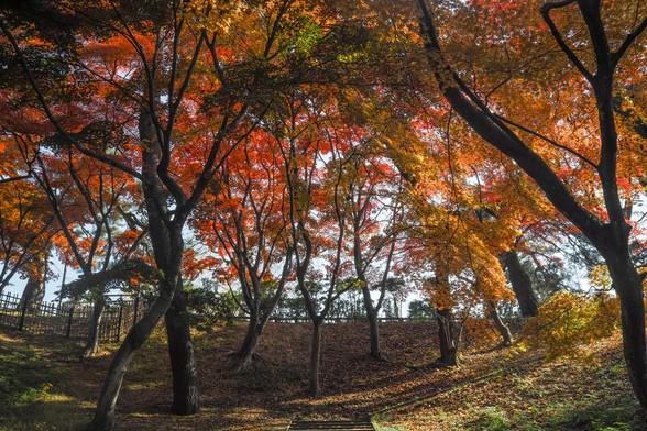20171103午前の弘前・弘前公園SD1-126.jpg