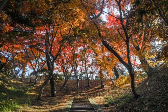 20171103午前の弘前・弘前公園SD1-131.jpg