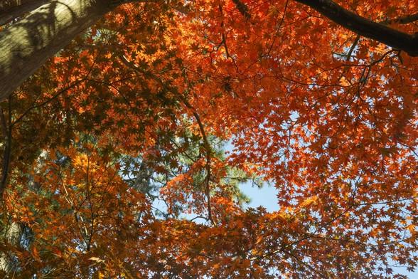 20171103午前の弘前・弘前公園SD1-169.jpg