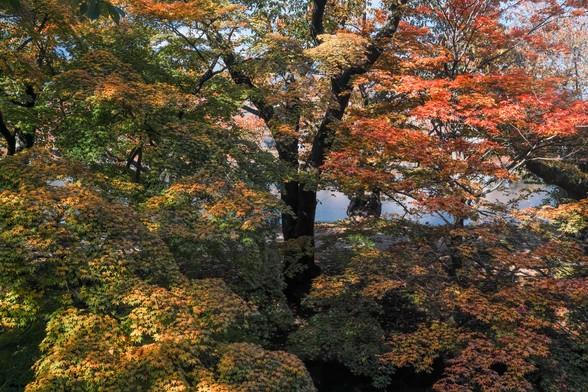 20171103午前の弘前・弘前公園SD1-176.jpg